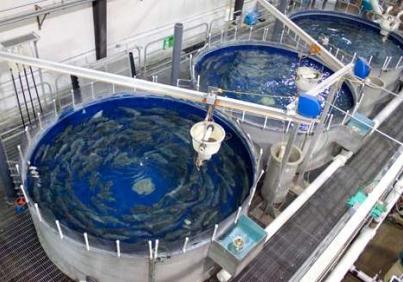 """Стартира прием по процедура чрез подбор на проекти № BG14MFOP001-4.042 """"Продуктивни инвестиции в аквакултурите на територията на МИРГ Бургас-Камено"""""""