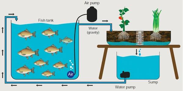 aquapontics